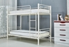 Picture of STELLA STEEL FRAME SINGLE BUNK BED *WHITE
